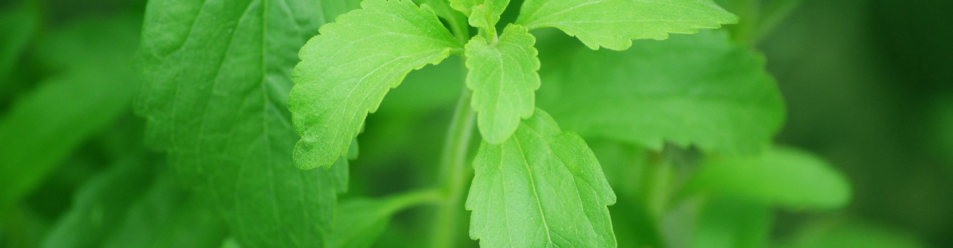 Il dolce non dolce… La stevia.