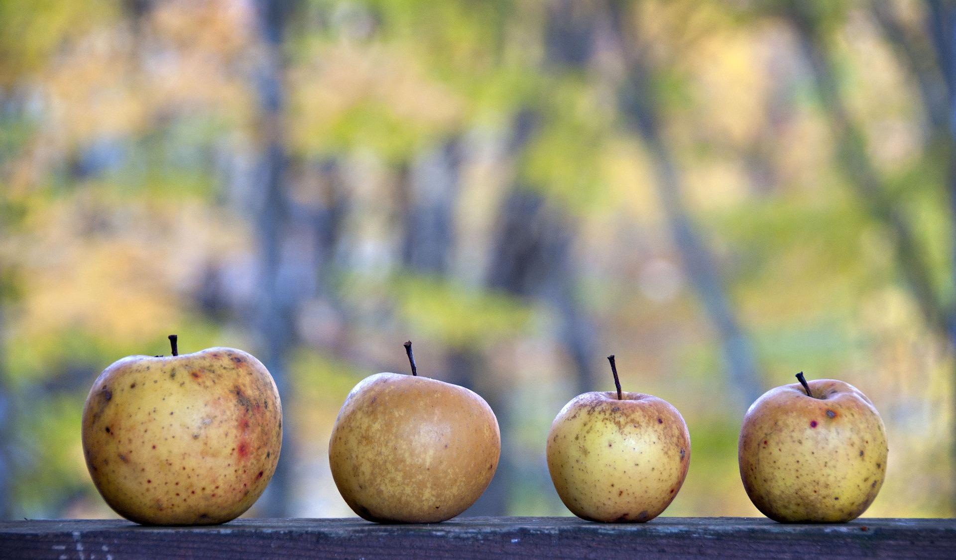 La mela: da alimento naturale a risorsa funzionale