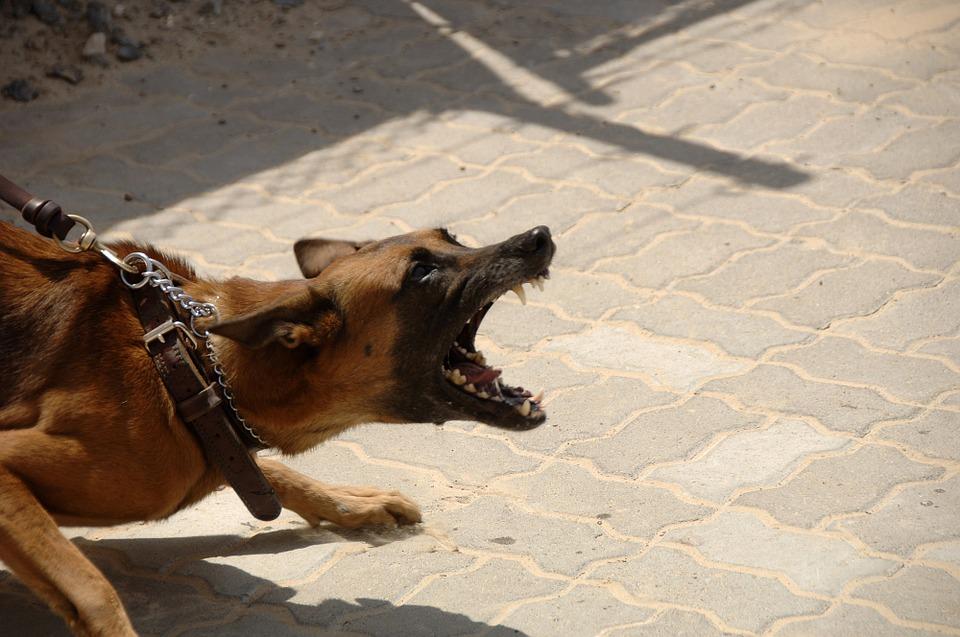 Alimentazione e comportamento nei cani