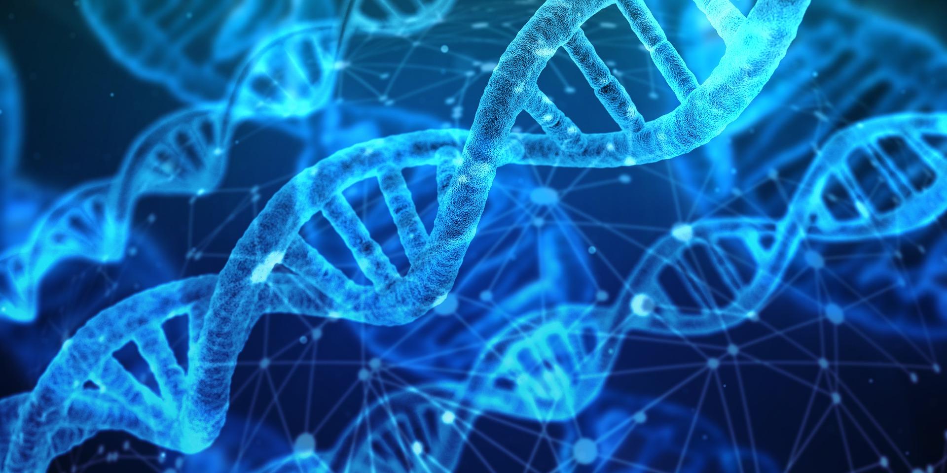 Com'è fatto il DNA?