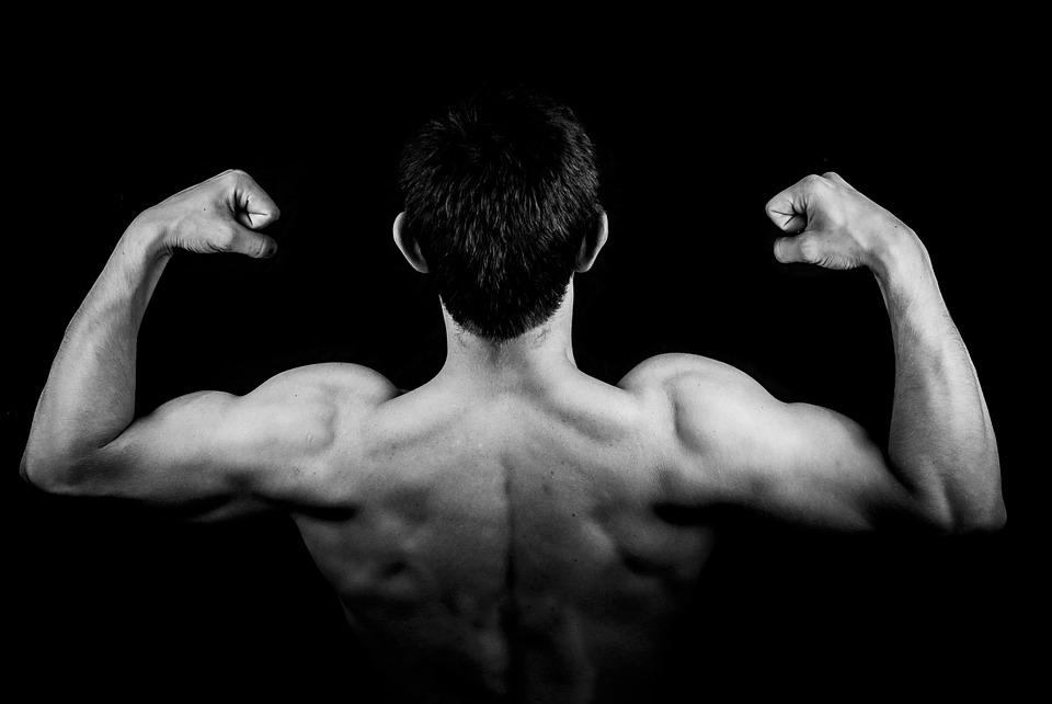 Proteine (1) – Come si costruiscono nel muscolo