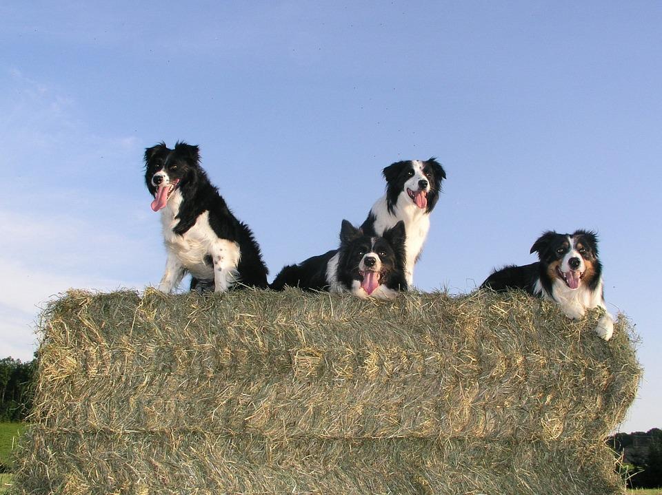 La nutrizione dei cani secondo la nutrigenomica