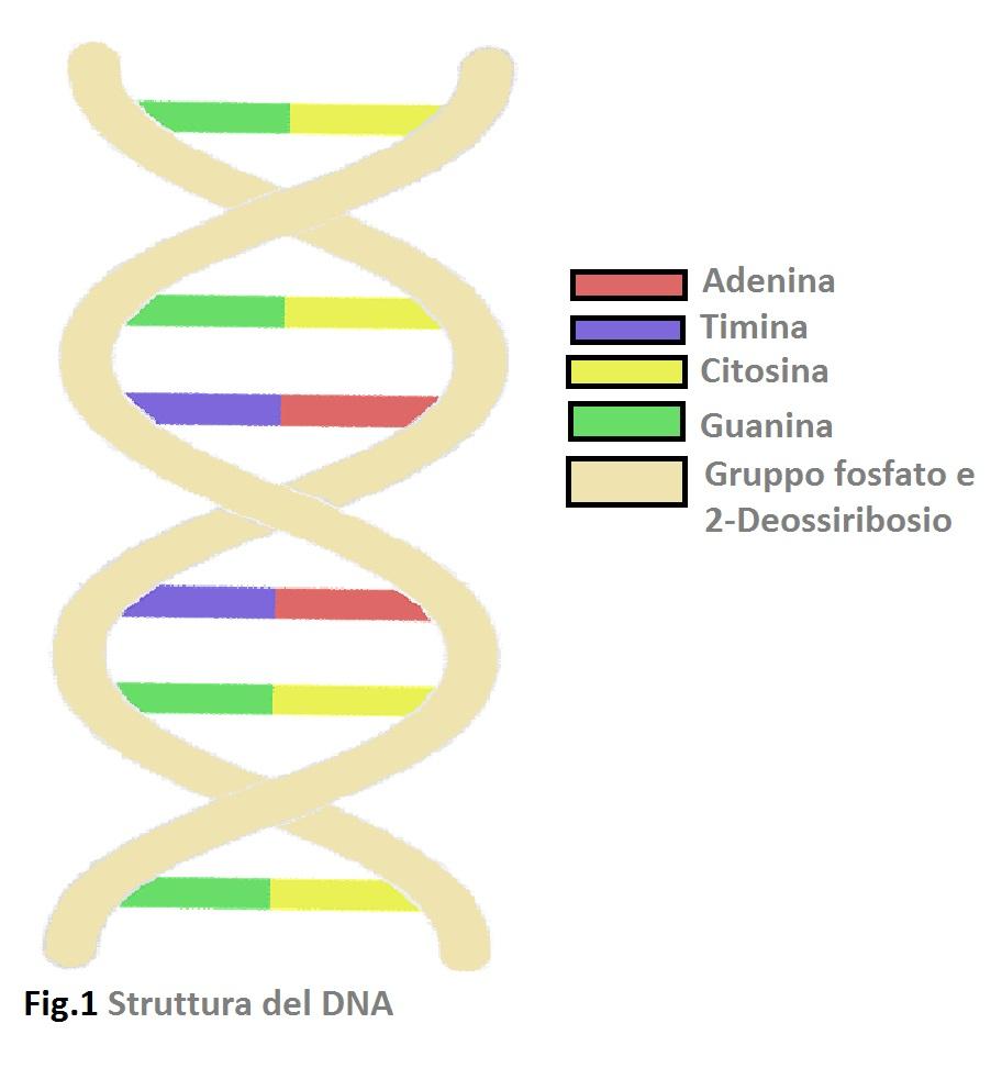 DNA Antico, IL DNA ANTICO
