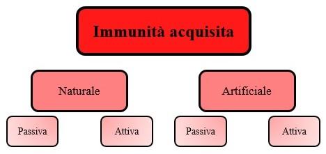 Come può essere l'immunità specifica?, Come può essere l'immunità specifica?