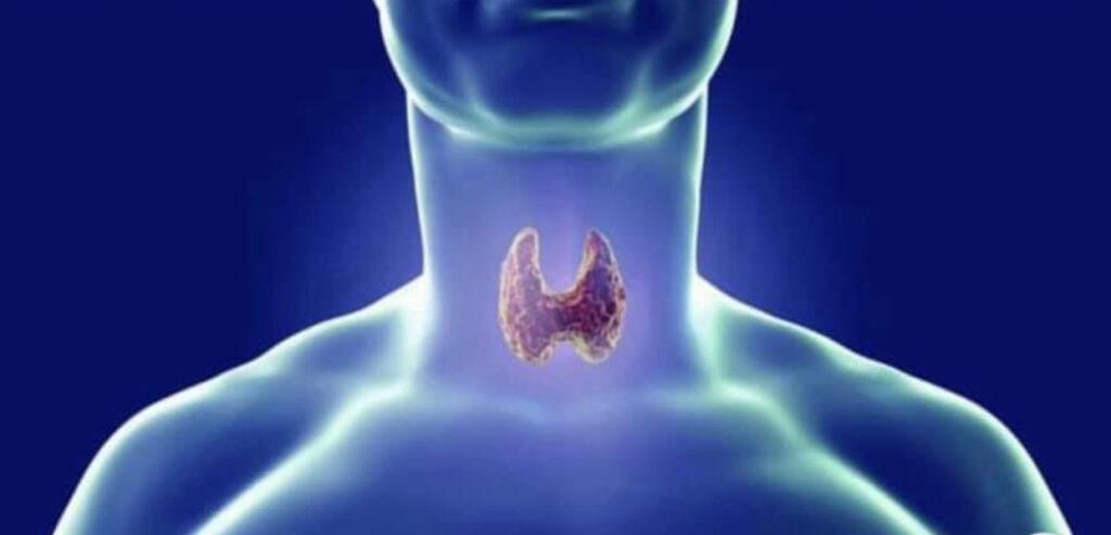 tiroide, Intestino e tiroide: dal foglietto embrionale all'autoimmunità d'organo