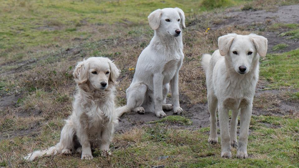 cani, Nei cani alcuni componenti del microbiota intestinale possono essere causa di malattie del sistema nervoso centrale