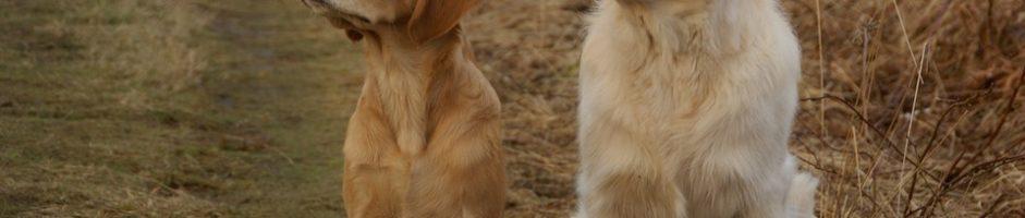 Il ruolo fondamentale della taurina nella salute del cane