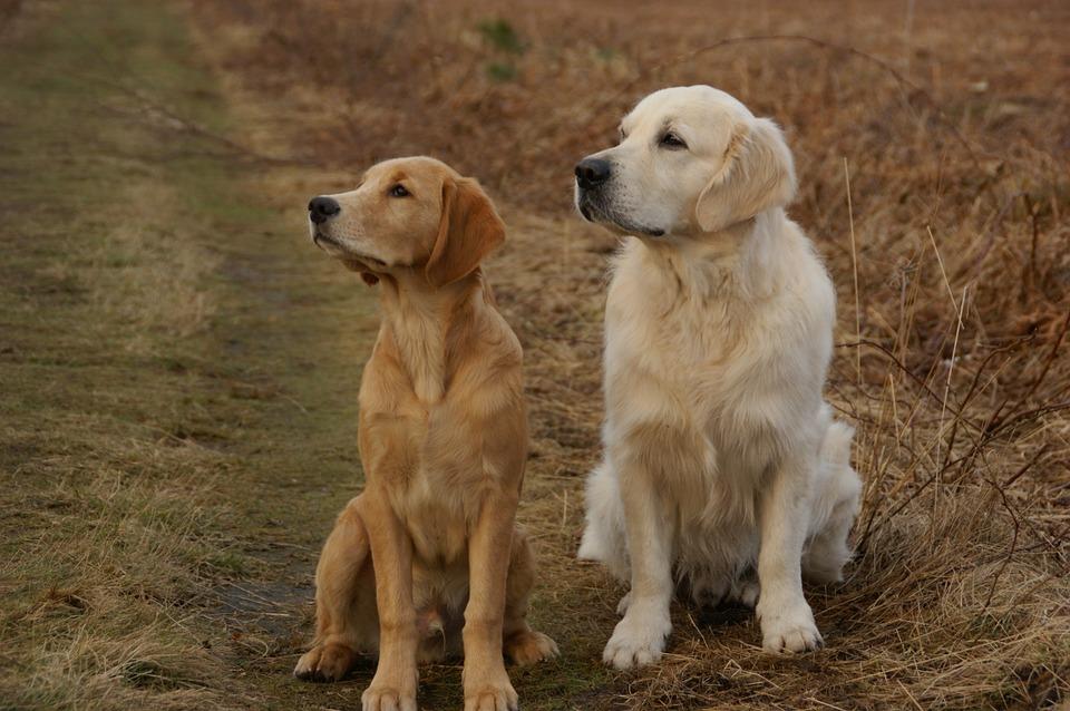 , Il ruolo fondamentale della taurina nella salute del cane