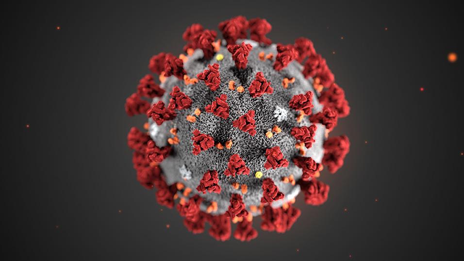 , Come il coronavirus SARS-CoV-2 entra nelle cellule