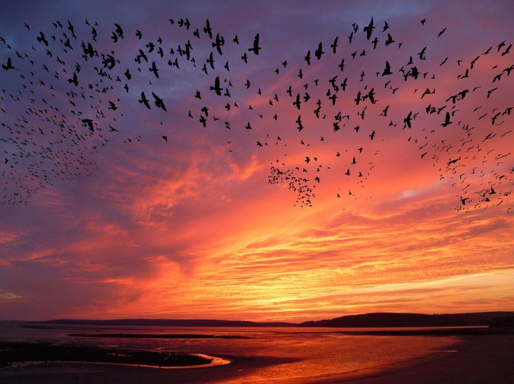"""L' """"homing"""" degli animali migratori., Si torna sempre dove si è stati bene. L' """"homing"""" degli animali migratori."""