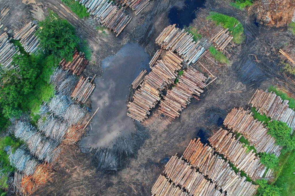 Perdita di biodiversità come causa di pandemie, Antropocene, biodiversità e pandemie