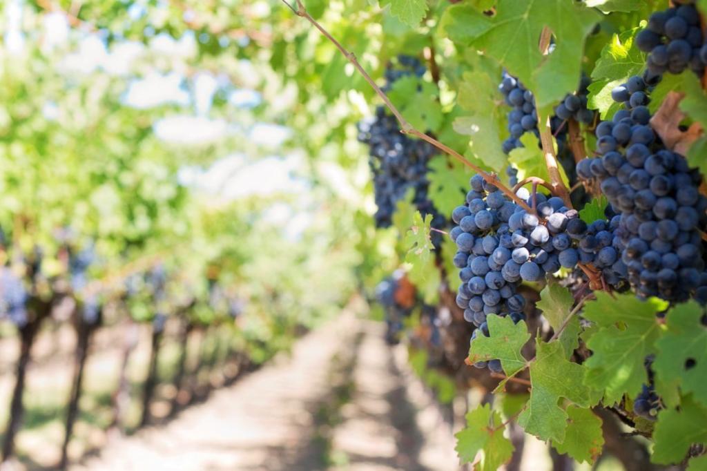 , Wine Waste: trasformare gli scarti del vino in risorse è possibile.