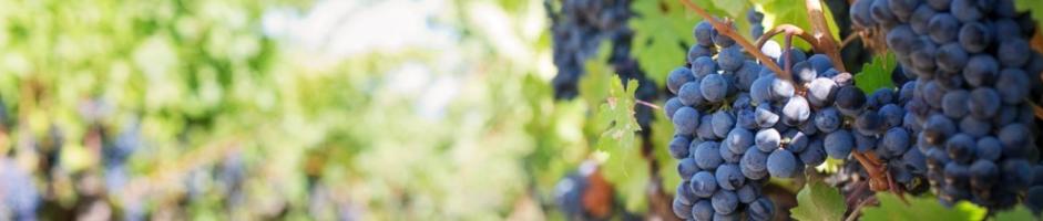 Wine Waste: trasformare gli scarti del vino in risorse è possibile.