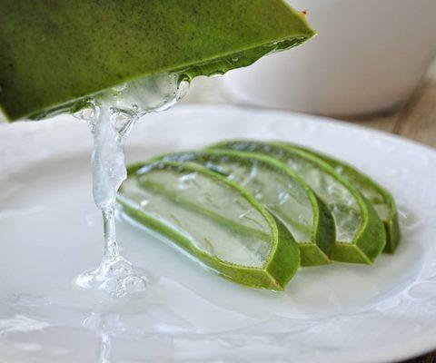 Aloe Vera: la pianta dell'immortalità e della bellezza per gli antichi Egizi, tuttora utilizzata per le sue proprietà terapeutiche e farmacologiche.