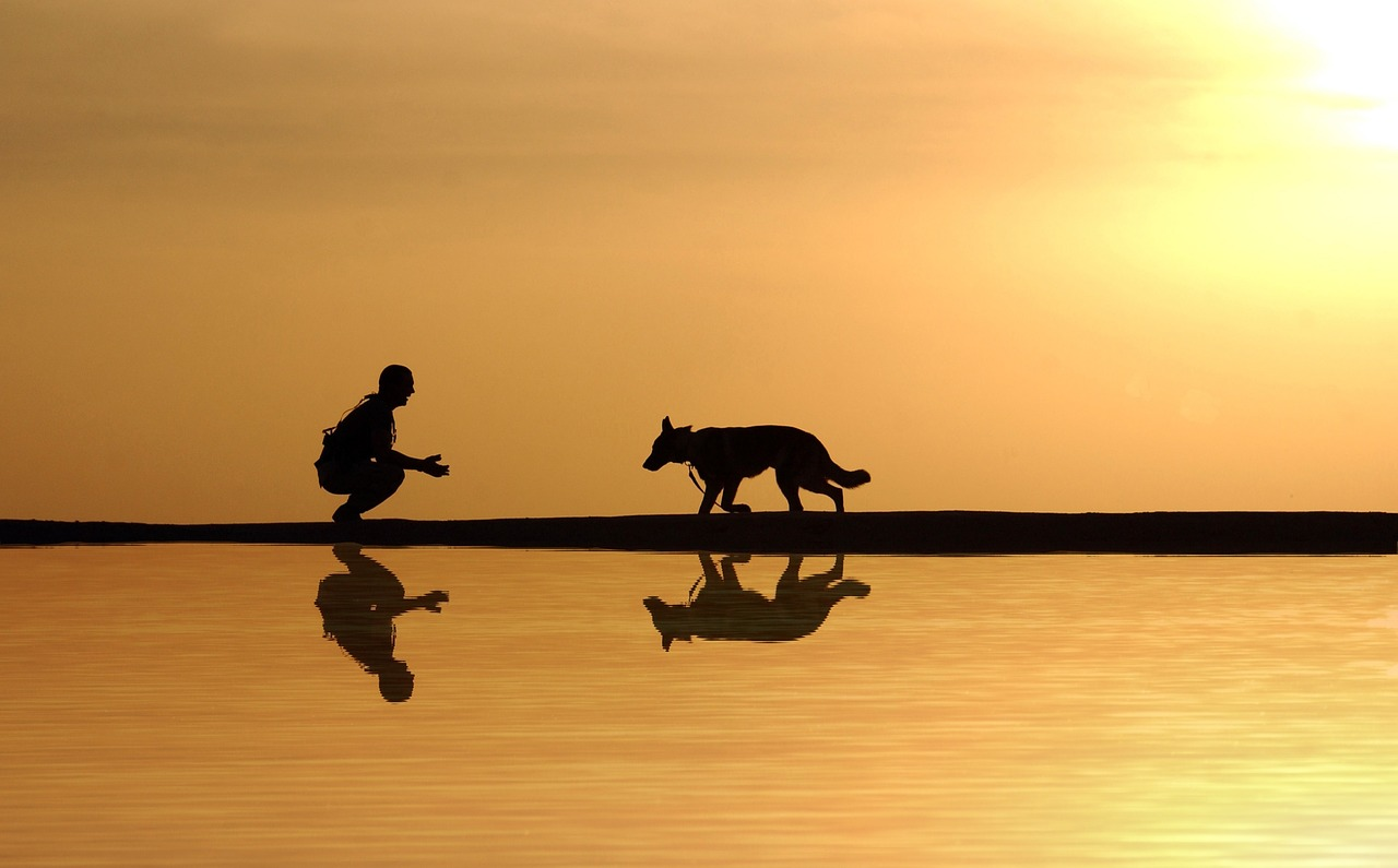 Storia della lunga amicizia tra uomo e cane