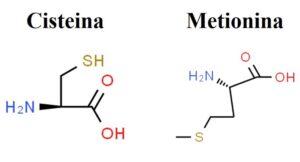 Proteine: composizione e costruzione di queste fondamentali biomolecole, Proteine: composizione e costruzione di queste fondamentali biomolecole