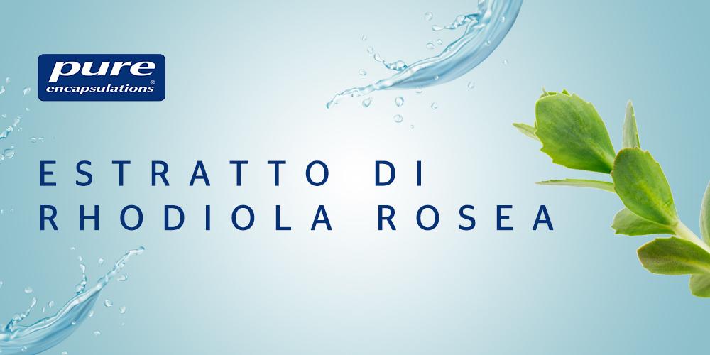 , Rhodiola rosea: pianta medicinale vegetale tradizionale per la stanchezza, l'affaticamento e i malumori stagionali